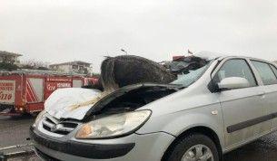 İstanbul'da korkunç kaza 3 at telef oldu