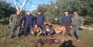 Koruma altındaki oklu kirpiyi avlayanlara rekor ceza