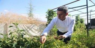 Gölbaşı Kent Çiftliği Projesi hayata geçiyor