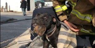 Konserve kutusuna dili sıkışan köpeği itfaiye kurtardı