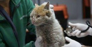 Enkaz altından çıkarılan kedi Toros'a belediyede bakılıyor