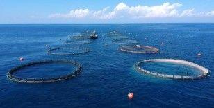 Su ürünleri ihracatından ocakta 90,5 milyon dolarlık gelir