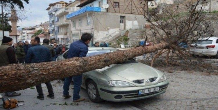 Şiddetli rüzgar ağacı kökünden söktü araçların üstüne devrildi