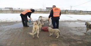 Muş Belediyesi zorlu kış şartlarında minik canları sahipsiz bırakmıyor
