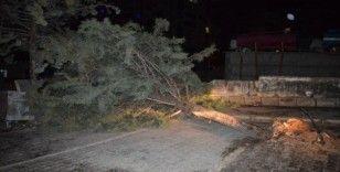 Malatya'da şiddetli fırtına ağacı kökünden söktü