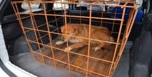 Büyük bir operasyon geçiren köpeğin tedavisi tamamlandı