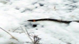 Yılanlar kış uykusundan erken uyandı