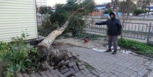 Rüzgarda ağaçlar yıkıldı, yıkılma riski olanlar budandı