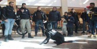 Şanlıurfa'da narkotik köpeği 'Kyra' ilgi odağı oldu