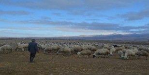 Çobanlar hem kış şartları hem de arazi şartları ile mücadele ediyor