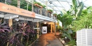 Tropikal Kelebek Bahçesi yenilenen yüzüyle kapılarını açıyor
