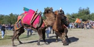 Kaş'ta deve güreşi festivali