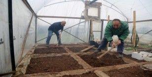 Mezitli gönüllü serası ihtiyaç sahipleri için üretiyor