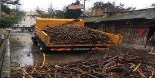 Taşkınlarla sahile dolan odunlar, ihtiyaç sahiplerine dağıtılacak