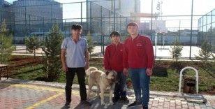 Öğretmenlerinden izin alıp dersten çıktılar, tellere takılan köpeği kurtardılar