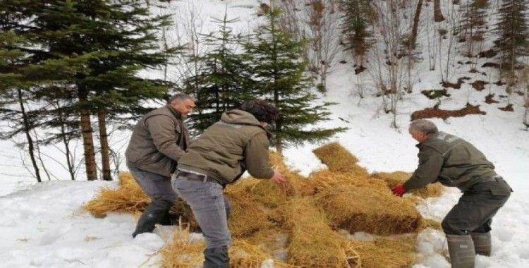 Kar yağışı nedeniyle aç kalan hayvanlara yem bırakıldı