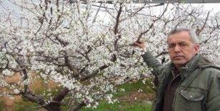 Mersin'de kar yağdı erik ağaçları çiçek açtı