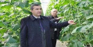 Teknolojik termal seralarda salatalık üretimi