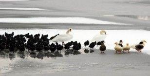 Kayseri'de göl dondu