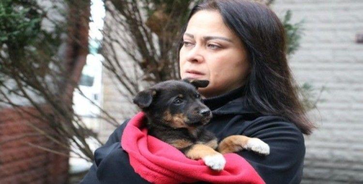 Zonguldak'ın Kozlu ilçesinde 8 köpek yavrusundan 7'si ormanlık alanda ölü bulundu