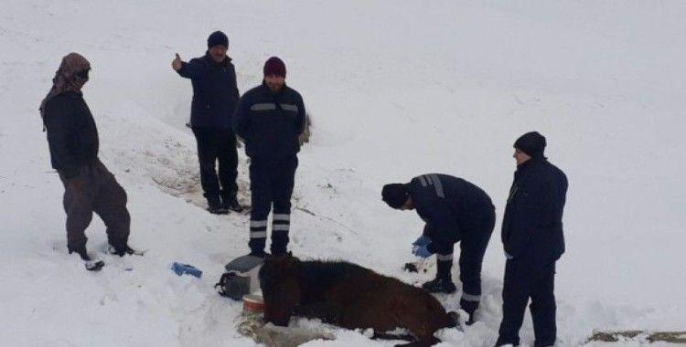 Soğuktan ayakları donan atı kurtarmak için seferber oldular