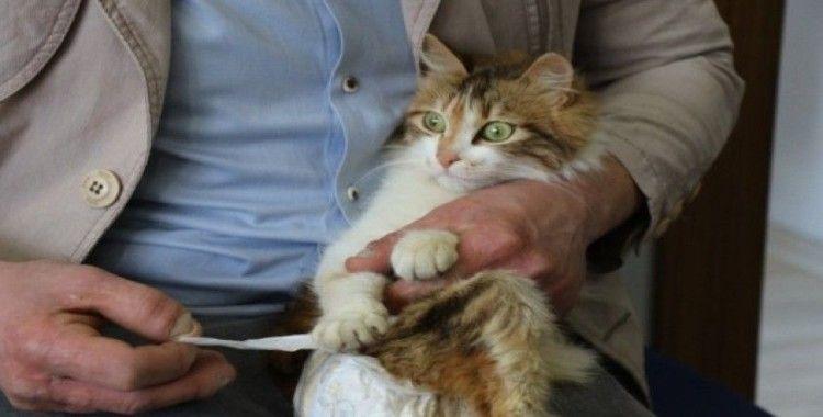 Sakat kalan kedisini her gün bezleyip, evladı gibi bakıyor