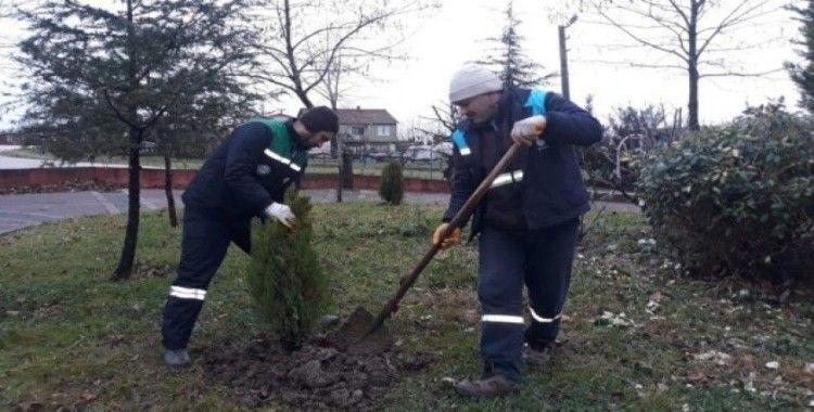 Başiskele'de ağaç budama çalışmaları sürüyor