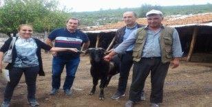 Muğla'da 'teke değişim' projesi