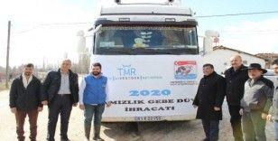 Türkiye'nin ilk damızlık düve ihracatı Eskişehir'den yapıldı
