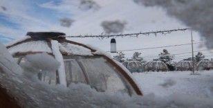 Dondurucu soğuğa karşı cam fanuslu çözüm