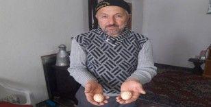 Bu tavuk 'Allah' yazan yumurtalar yumurtluyor