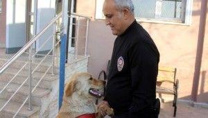 Kaybolan köpek karakola sığındı