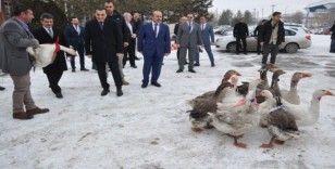 Diğer illerde yetiştirilen kazlar Kars'ta piyasaya sunuluyor