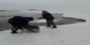 Murat Nehri'ne yemek aramaya giden kurt köpeği mahsur kaldı
