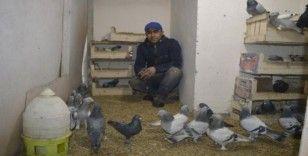 Güvercinlerle yatıp kalkıyor