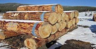 Kütahya'da 2 milyon 96 bin TL orman emvali satışı