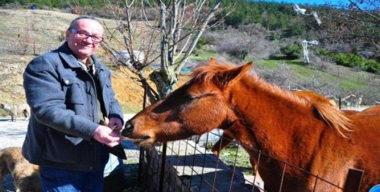 Spil'in yılkı atları, onun yolunu gözlüyor