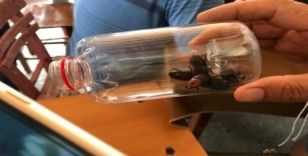 Palmiye kırmızı böceği ile ortak mücadele toplantısı düzenlenecek