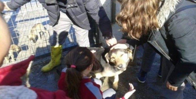 Taşköprü'de öğrenciler, hayvan barınağını ziyaret etti