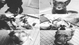Polonya'da 6 polis köpeği feci şekilde can verdi