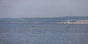 İzmit Körfezi'nde yunus balıklarından görsel şölen