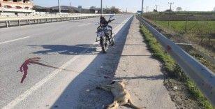 Motosikletli genç ölü olarak bulduğu köpeği boş araziye gömdü
