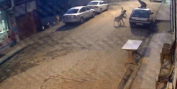 Köpekler saldırdı, darbeyi ise yere düşerek aldı
