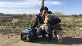 Sınırı geçerken 6 yıldır baktığı kedisi ve köpeğinden vazgeçti