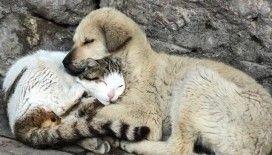 Kedi ve köpek sevgisi duygulandırdı