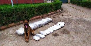 'Oscar' 49 kilo 700 gram esrar buldu