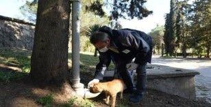 Büyükşehir'den sokak hayvanlarına mama dağıtımı