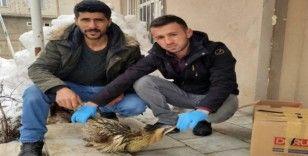 Yüksekova'da Hint balıkçıl kuşu bulundu