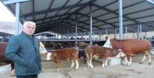 Oltu canlı hayvan pazarı kapatıldı
