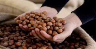 AB ülkelerine iki ayda 5 bin 156 ton 522 kilo fındık ihraç edildi